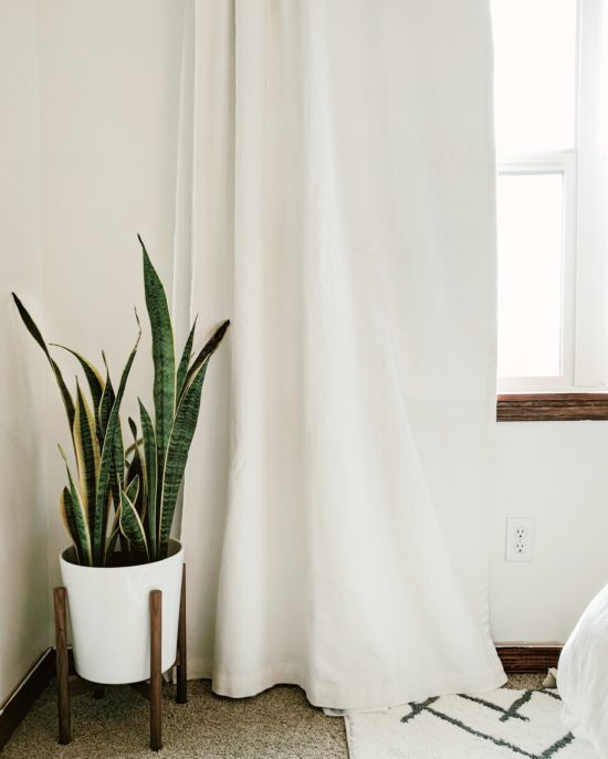 Greenery To Accent a Room's Decor