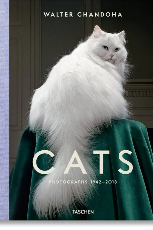WALTER CHANDONA CATS PHOTOGRAPHS 1942 2018