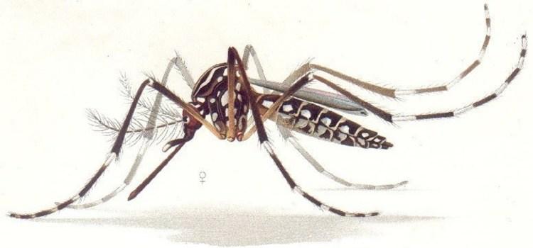 Confirman 14 casos de dengue en la provincia