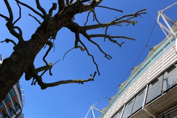 St John's Wood Lord's Cricket Ground © Lavender's Blue Stuart Blakley