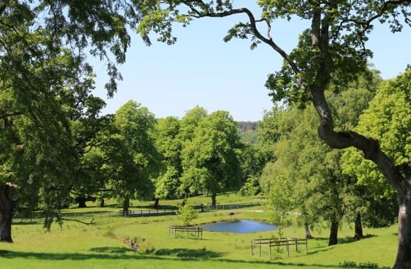Baronscourt Estate Tyrone © Lavender's Blue Stuart Blakley