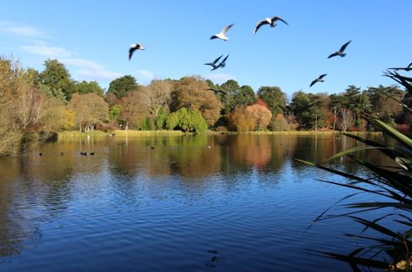 mount-stewart-greyabbey-lake-lavenders-blue-stuart-blakley