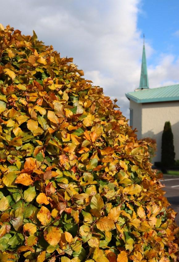 St Patrick's Church Murlog Donegal Garden © Lavender's Blue Stuart Blakley