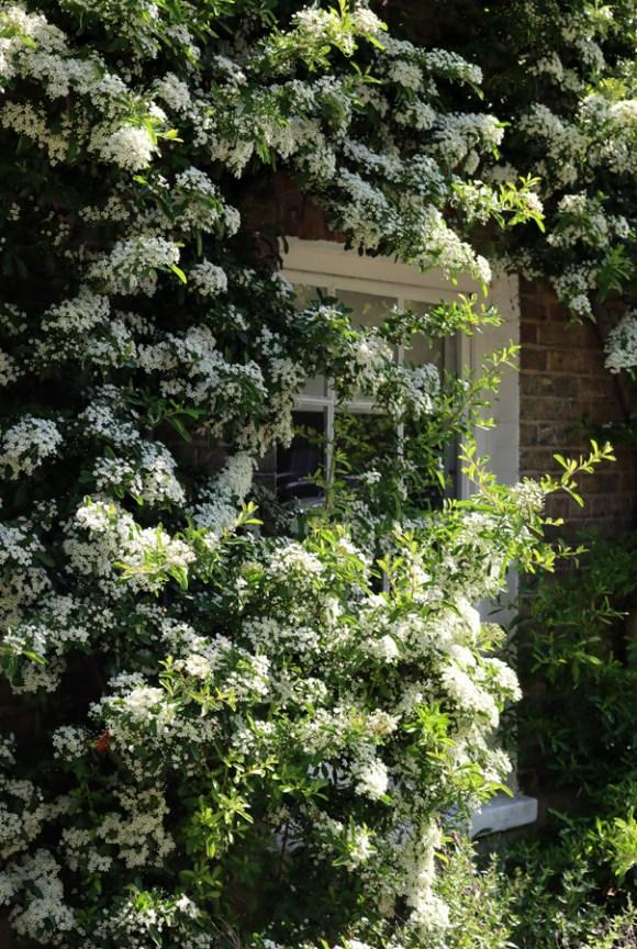 Georgian House Facade Cleaver Square Kennington © Lavender's Blue Stuart Blakley
