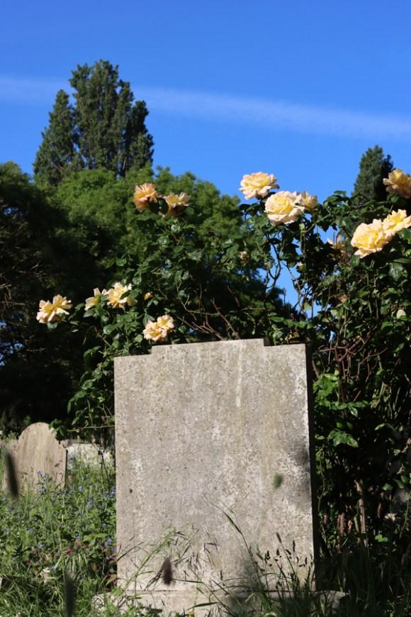 St Mary's Cemetery Battersea London Roses © Lavender's Blue Stuart Blakley