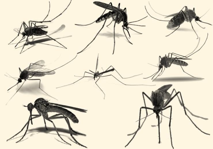 mosquito-brushes