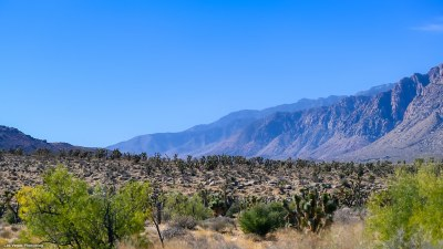 Fault line with Joshua trees in foreground