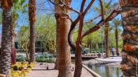 Beauty at Downtown Summerlin