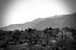 the-bw-valley