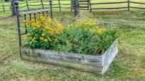 flower-bed