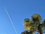 palm-and-plane