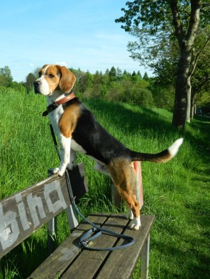 Hund des Monats März: Bismarck