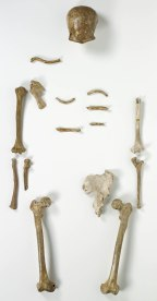 Das Skelett des Neandertalers. LVR-LandesMuseum Bonn. Foto: J. Vogel, LVR-LandesMuseum Bonn.