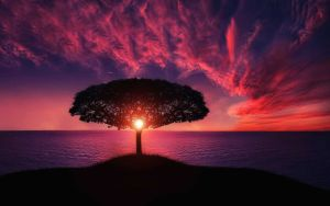 Secret nature sunset hiding behind tree