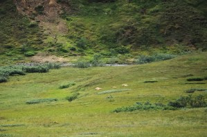 3 brown bears sleeping on a hill