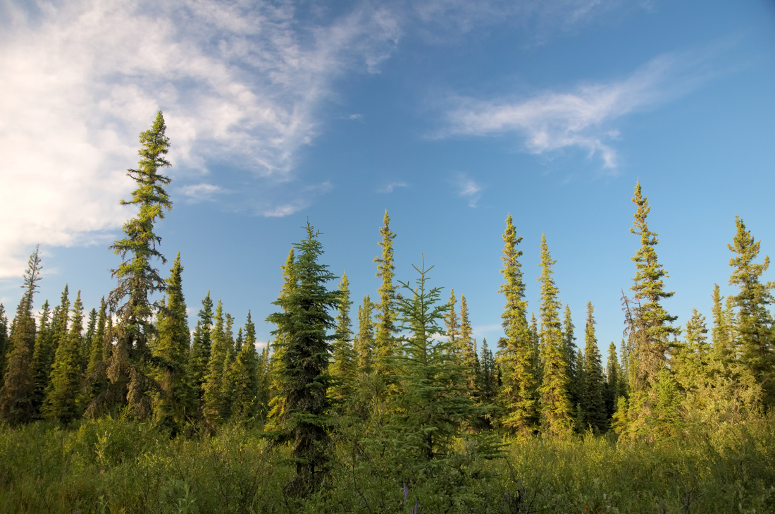 Another night of walking, another night of mosquito swatting, and another night of gorgeous light. This time with the Sun to our backs as it spread the gold-on-green color all over our path.