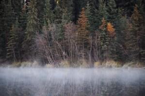 fog over ballaine lake under bare trees