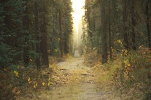 trails at uaf