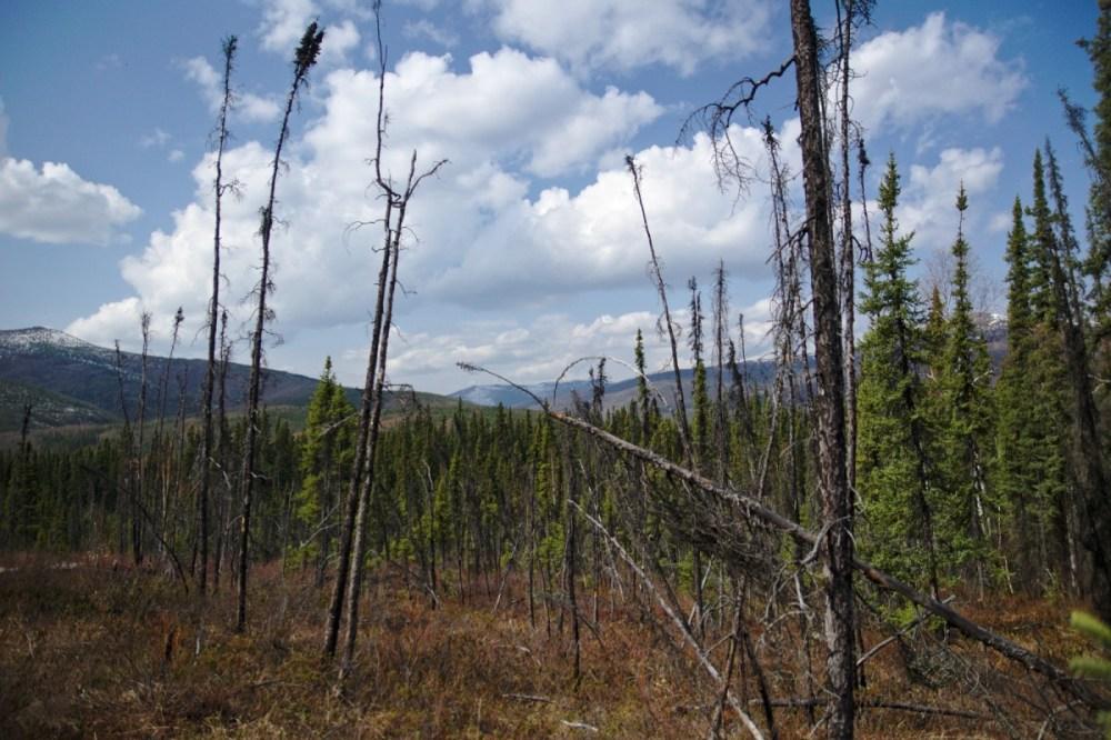 On the trail through an old burn area - Angel Rocks