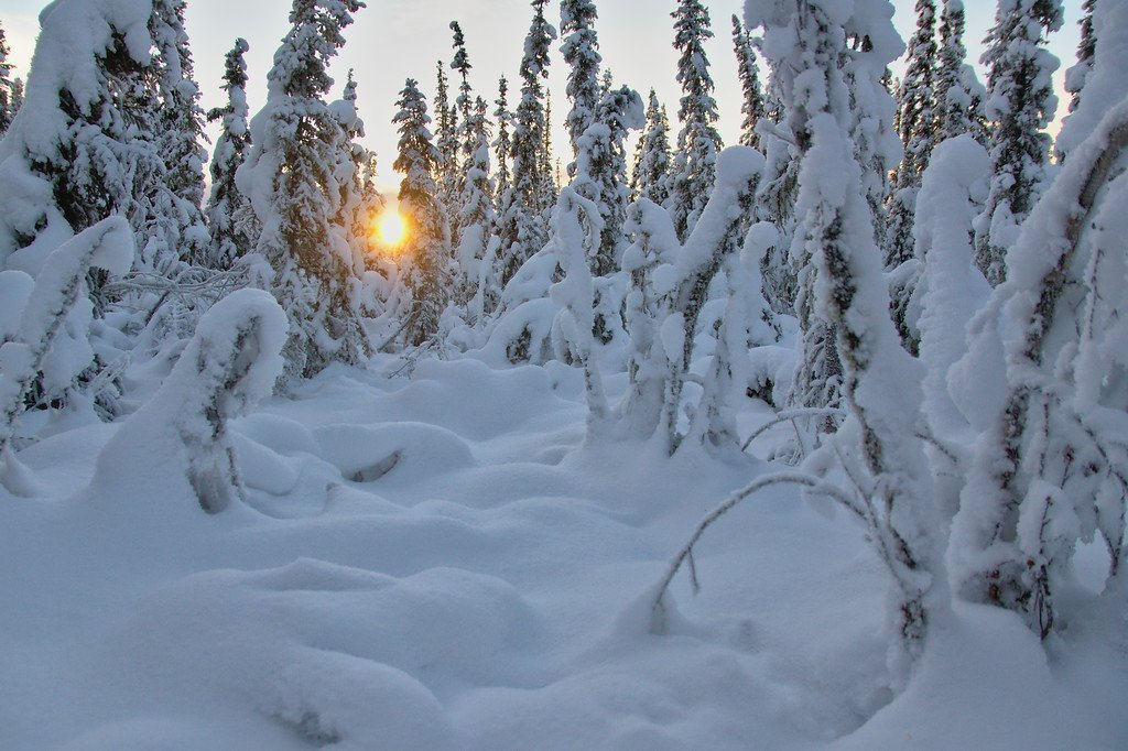 At 2 pm we're just about a month past the winter solstice, but the sun still doesn't get very high in the sky. Peeking through the trees in Fairbanks, Alaska.