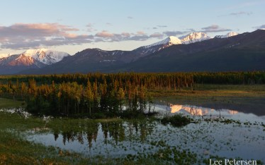 Golden light hits the top of the trees near Ruby Creek in the Alaska Range
