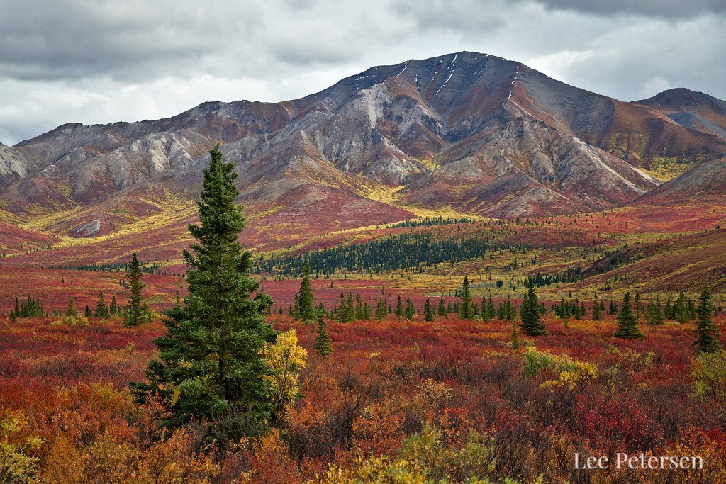 Red and yellow fall colors on a mountain in Denali National Park