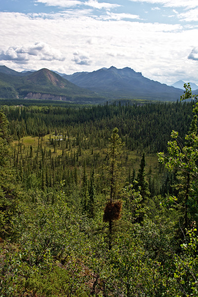 From the Meadow View Trail near the entrance of Denali National Park.