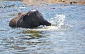 elephant-baby-266792_1280