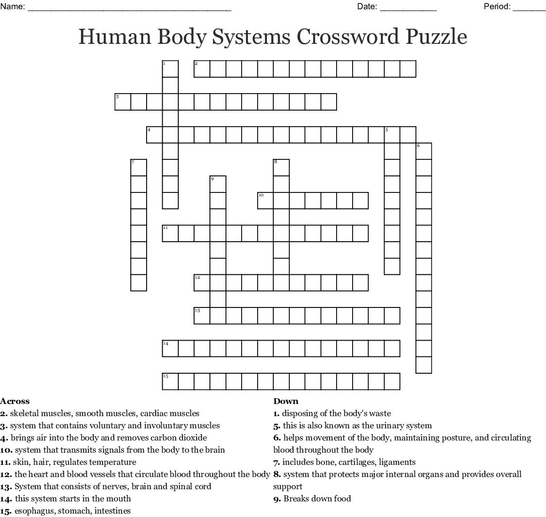 Anatomy Crossword Puzzles Printable