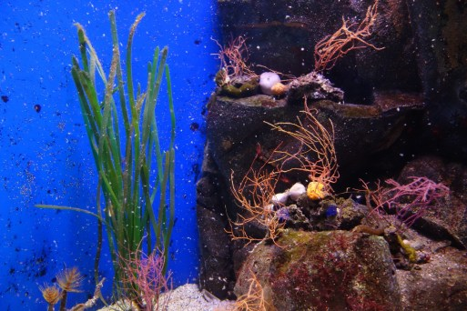 photo8_aquarium