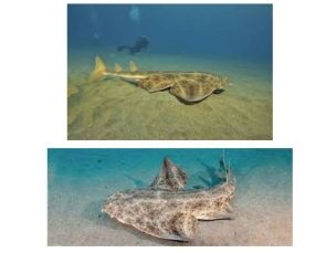 Photo 2 Requin Stage Matthis Aoustin