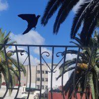 Free-Black-Bird-Travail_de_Silouhette_de_Shadi_Badi_4A_du_10_06_2020-3.jpg
