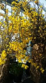 London Sky Garden Flowers 2