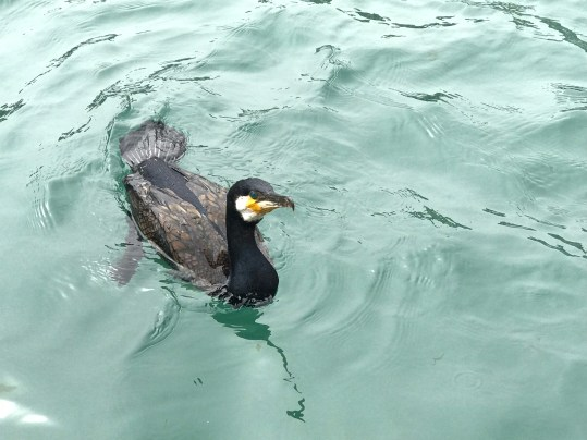 sea birds in Looe