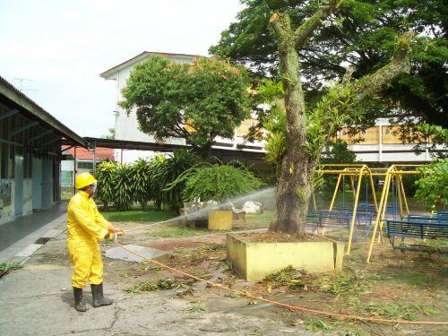 在王国慧的安排之下,灭蚁专家已前往金星小学校园内展开灭火蚁行动。