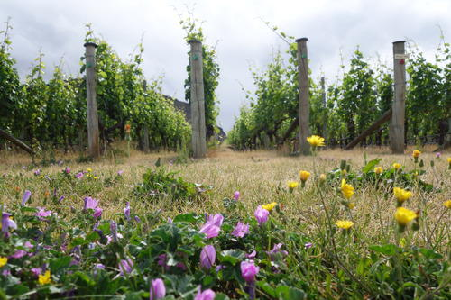 Wildflowers with the Vineyards in a distance