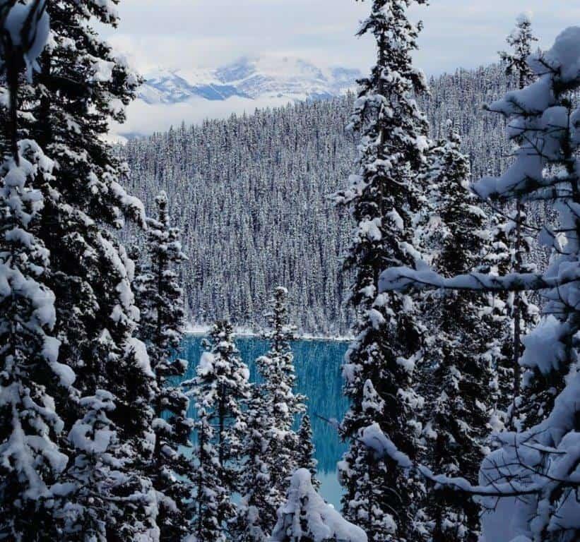 Gorgeous Blue colour of Lake Louise through the trees on the trek