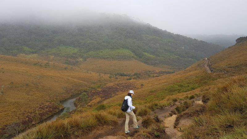 walking through the orangy fields at horton's plains