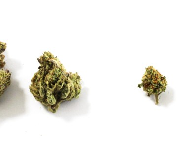 LYFTED MAGAZINEsmall cannabis strains