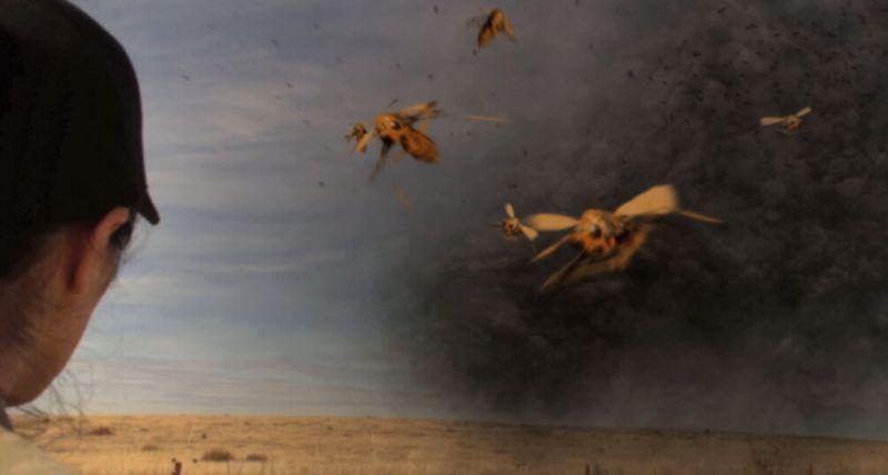 Tsunambee movie - Sheriff Feargo sees the swarm