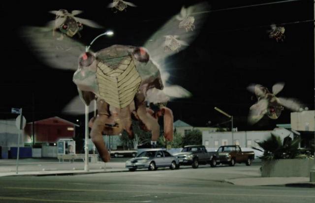 cicada movie review - cicada swarm