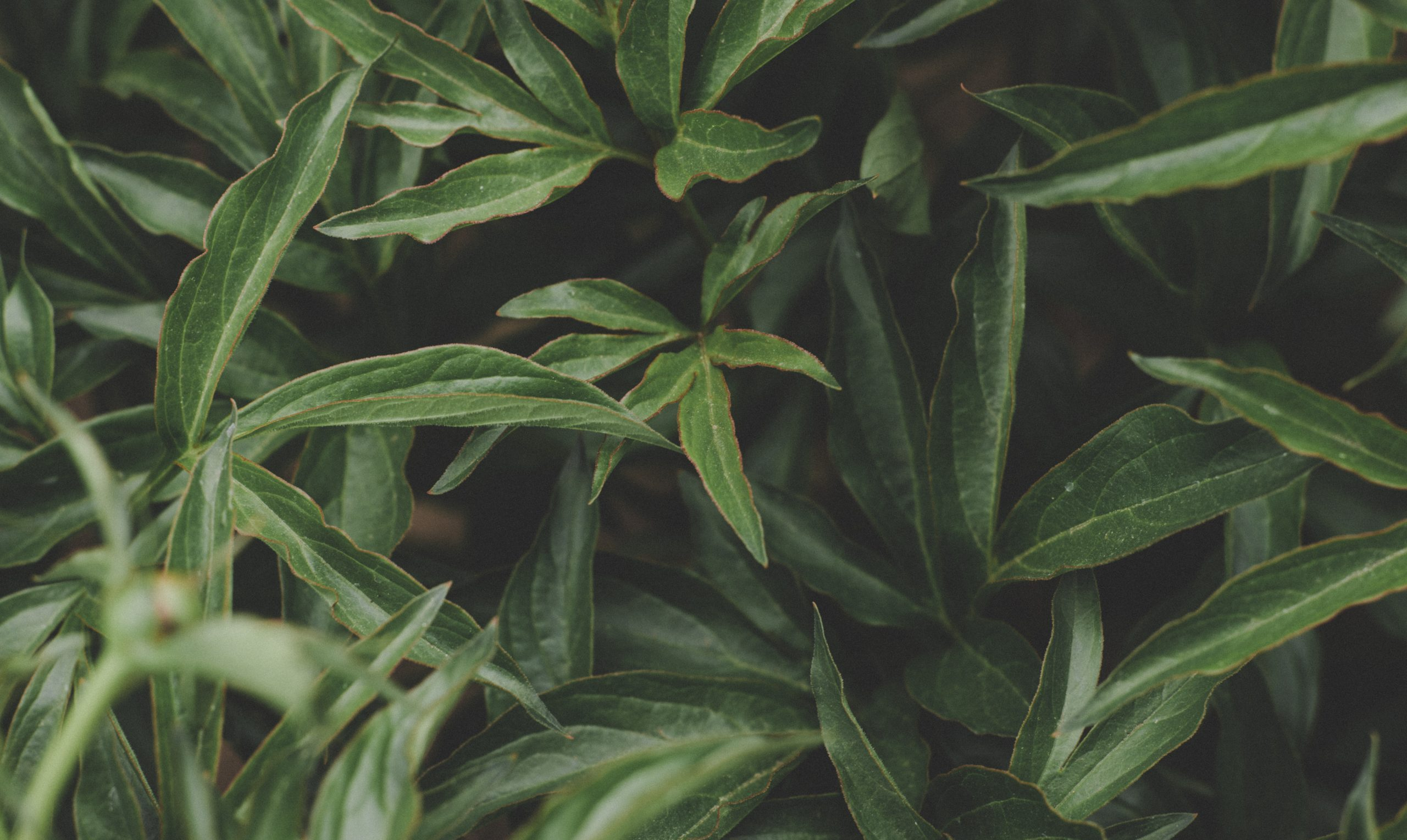 Canva - Photo Of Green Leaves