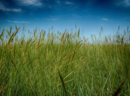 Lyme-time - Long grass