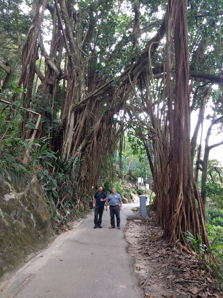 S D Trees