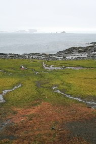 Moss beds in the Aitcho Islands