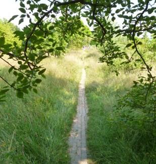 Great Dixter - Path