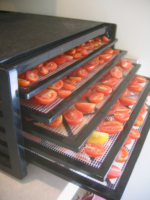 The Excalibur full of tomatoes to be dried.