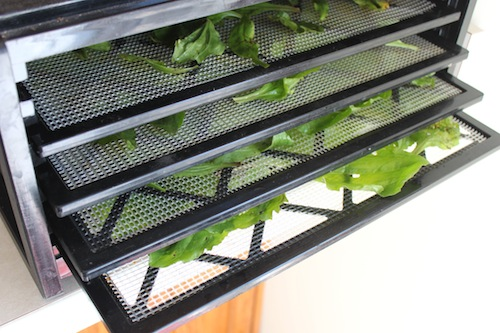 Plantain in the dehydrator