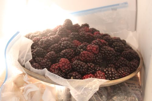 Frozen blackberries waiting to be bagged and moved.