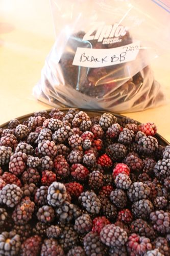 Frozen Blackberries ready to be bagged